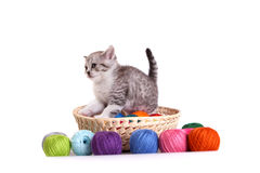 Kitten plays on a white background Royalty Free Stock Photography