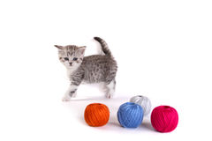 Kitten plays on a white background Royalty Free Stock Photos