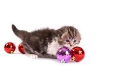 Kitten plays on a white background Stock Photos