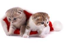 The kitten plays on  white background Stock Photo