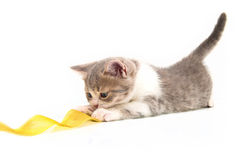 The kitten plays a yellow tape Royalty Free Stock Photos