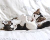 Kitten playtime Stock Image