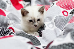 Kitten pleated beds Stock Images