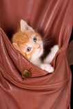 Kitten in a pocket Royalty Free Stock Photos