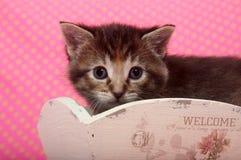 Kitten and polka dot background Stock Photo