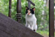 Kitten on a porch Stock Image