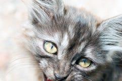Kitten portrait Royalty Free Stock Photo