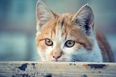 Kitten Stock Images