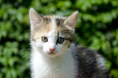 Kitten portrait in garden Royalty Free Stock Image