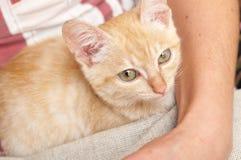 Kitten portrait Stock Photos
