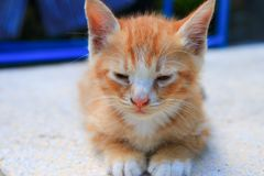 Kitten portrait orange-red, small cat cute select focus with shallow depth of field stock photo