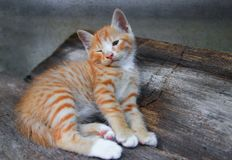 Kitten portrait orange-red, small cat cute on the wooden. stock image