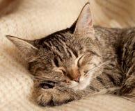 Kitten portrait Stock Photo