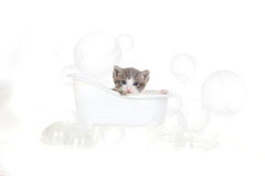 Kitten Portrait in Studio Taking a Bath Stock Photos