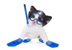 Kitten Portrait in Studio on White Background Stock Photos