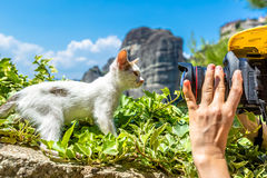 Kitten posing at Meteora Greece Royalty Free Stock Image