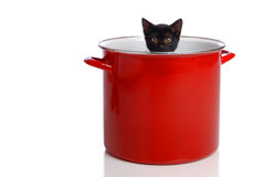 Kitten in a Pot. A black kitten in a large, red cooking pot Royalty Free Stock Photo