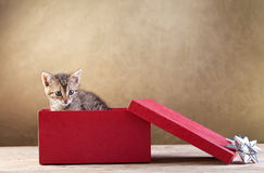 A kitten for present royalty free stock images