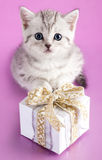 Kitten and present Royalty Free Stock Images