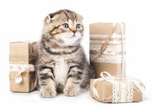 Kitten in a present box Royalty Free Stock Image