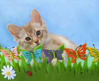 Kitten in a pretend garden Stock Photo
