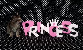 Kitten and princess sign Royalty Free Stock Photography