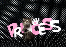 Kitten and princess sign Stock Photography
