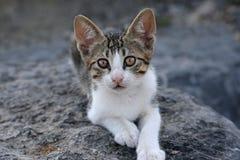 Kitten Profile Stock Photos