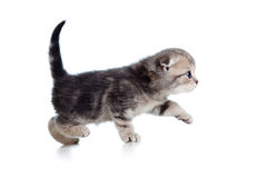 Kitten profile side view Royalty Free Stock Images