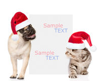 Kitten and pug puppy with red christmas hats peeking from behind  empty board. isolated on white background. Kitten and pug puppy with red christmas hats peeking Stock Photos