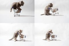 Kitten pulling a cart of food, screen split in four parts Royalty Free Stock Photography