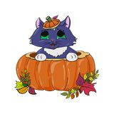 Kitten in a pumpkin halloween illustration Royalty Free Stock Images