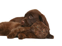 Kitten and a pup together. royalty free stock image