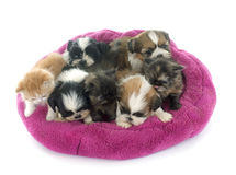 Kitten and puppies Stock Images