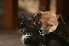 Kitten and puppy. Dreaming together Royalty Free Stock Images