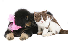 Kitten and puppy. Stock Photo