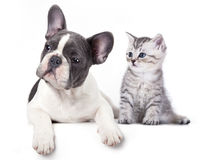 Kitten and   puppy Stock Photos