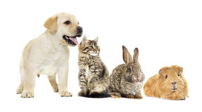 Kitten and puppy and bunny Stock Photos