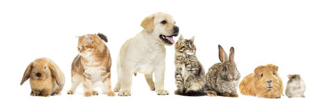 Kitten and puppy and bunny Stock Photography