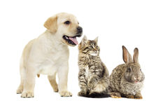 Kitten and puppy and bunny Royalty Free Stock Photos