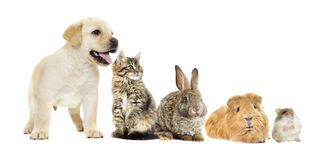 Kitten and puppy and bunny Royalty Free Stock Image