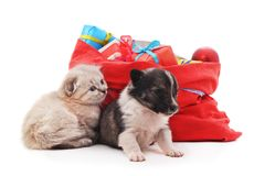 Kitten and puppy is near the Christmas bag with gifts. Kitten and puppy and Christmas bag with gifts on white background Stock Image