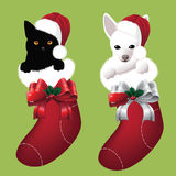 Kitten and puppy in Christmas stockings Royalty Free Stock Photography