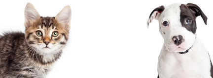 Kitten and Puppy Closeup Horizontal Banner. Closeup portrait of cute young tabby kitten and puppy looking into camera. Banner sized to fit popular social media Stock Images