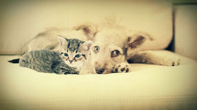 Kitten and puppy. On the couch stock images