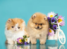 Kitten and puppy Royalty Free Stock Photos