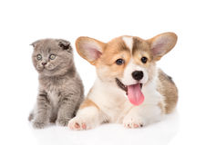 Kitten and puppy in front. isolated on white background Stock Photos