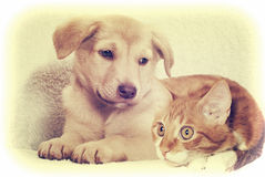 Kitten and puppy instagram Royalty Free Stock Photo