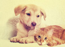 Kitten and puppy, instagram Royalty Free Stock Photography