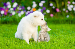 Kitten and puppy are kissing on the green lawn Stock Photography